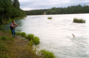 Kenai River bank fishing for sockeye salmon